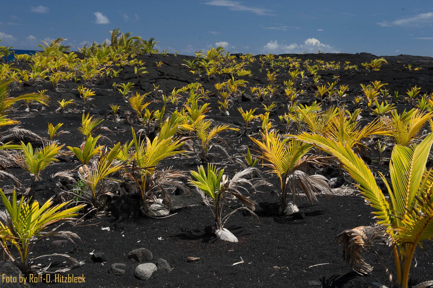 30.05.2014 – Kalapana Black Sand Beach – Kaimu Beach Park – auf der Kalapana-Kapoho Road