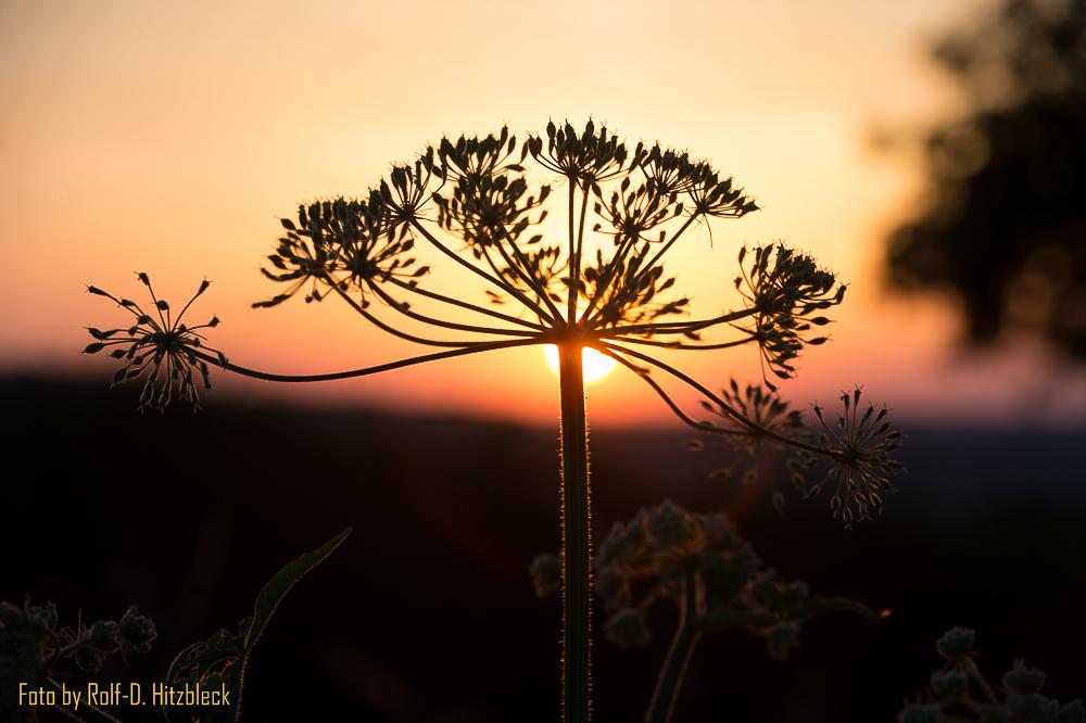 Sonnenaufgang am hohen Kreuz