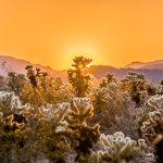30.05.2019 – Joshua Tree National Park